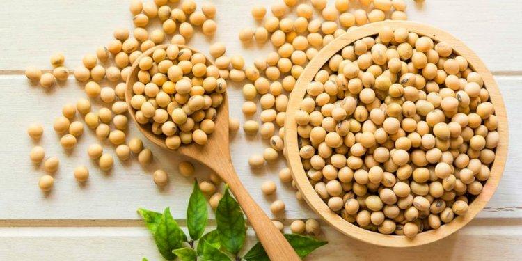 Kedelai merupakan bahan olahan dari tempe, tahu, dan susu kedelai yang tinggi protein